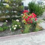 Розы. Частный коттеджный поселок «ДИМ»